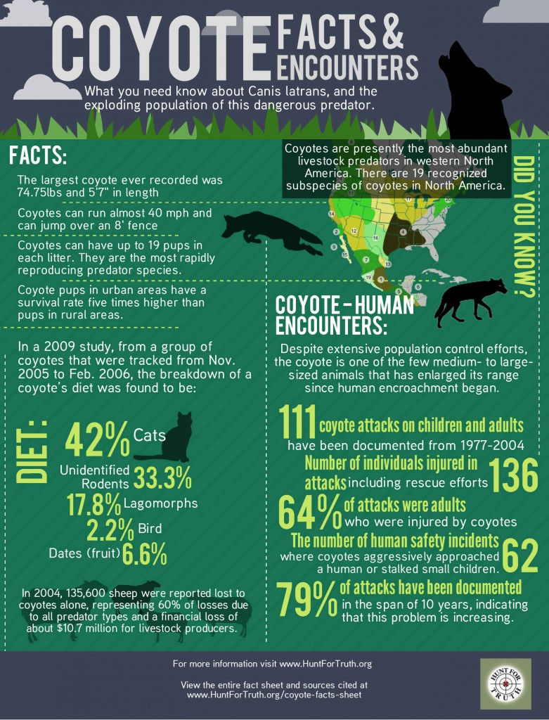 Coyote-Facts-Sheet-(5)web